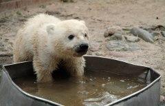 Filmfoto: Knut und seine Freunde